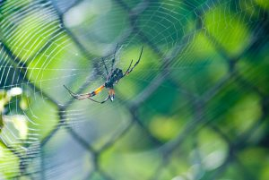 افزایش تمرکز و دقت عنکبوت