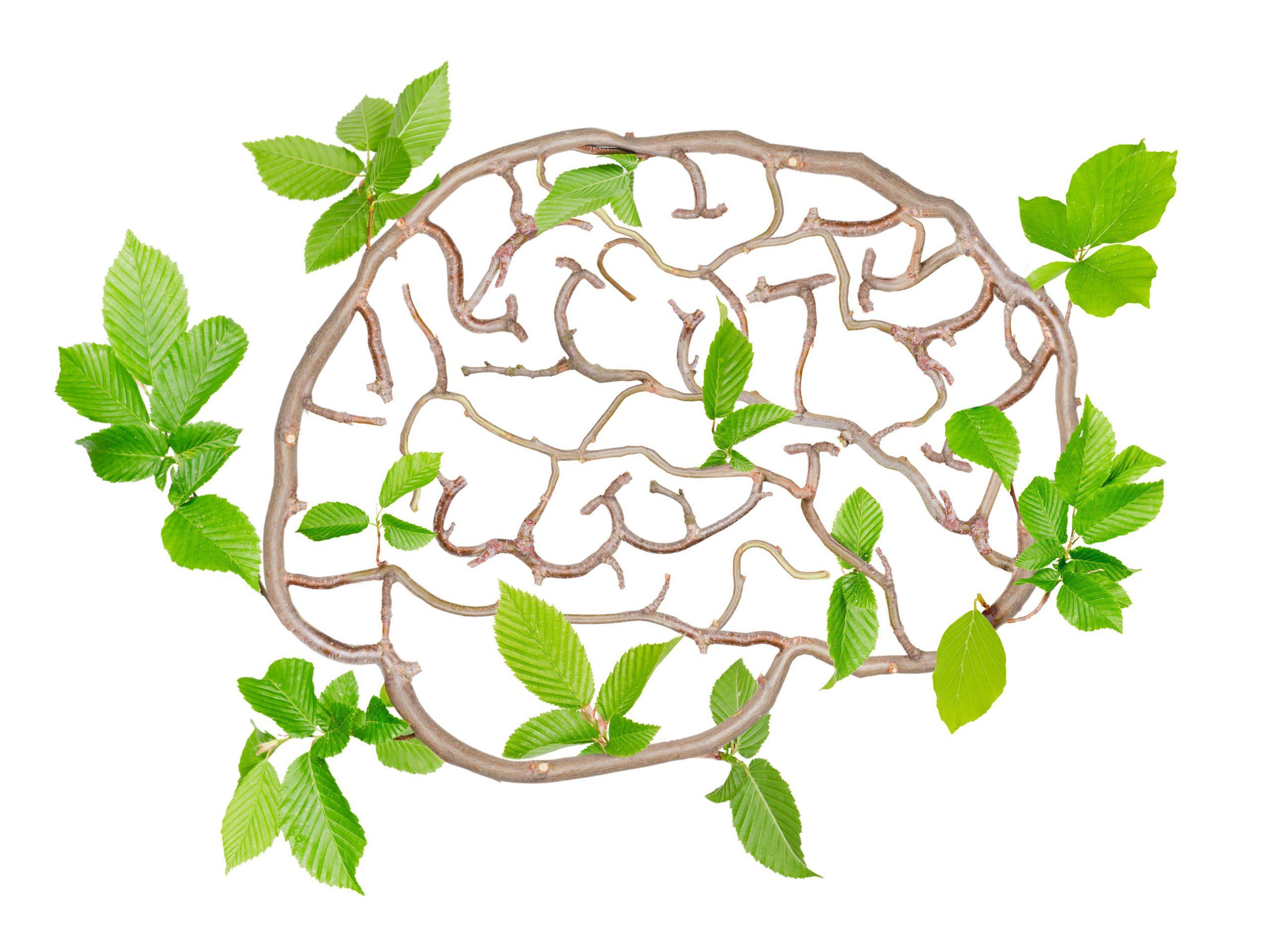 تقویت حافظه با طب سنتی