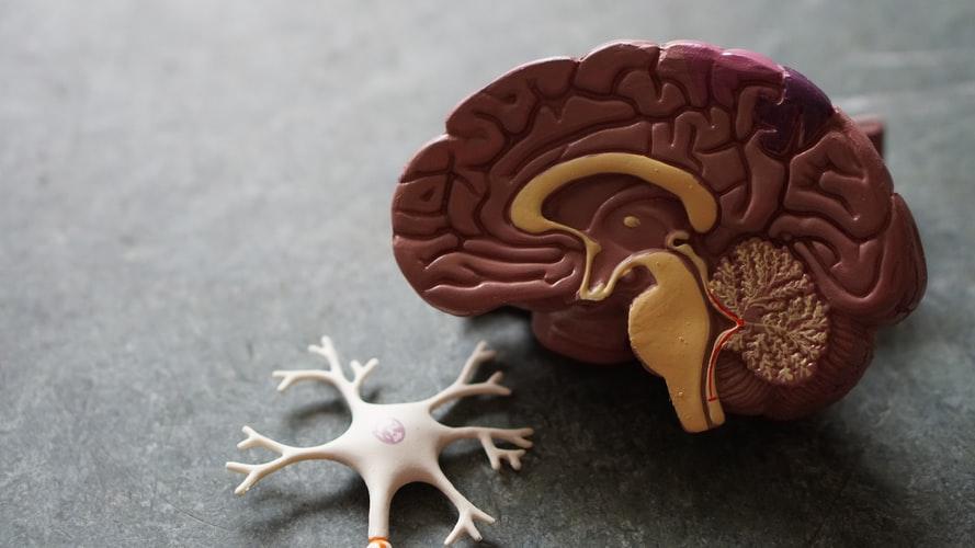مغز و تاثیر مطالعه بر افسردگی