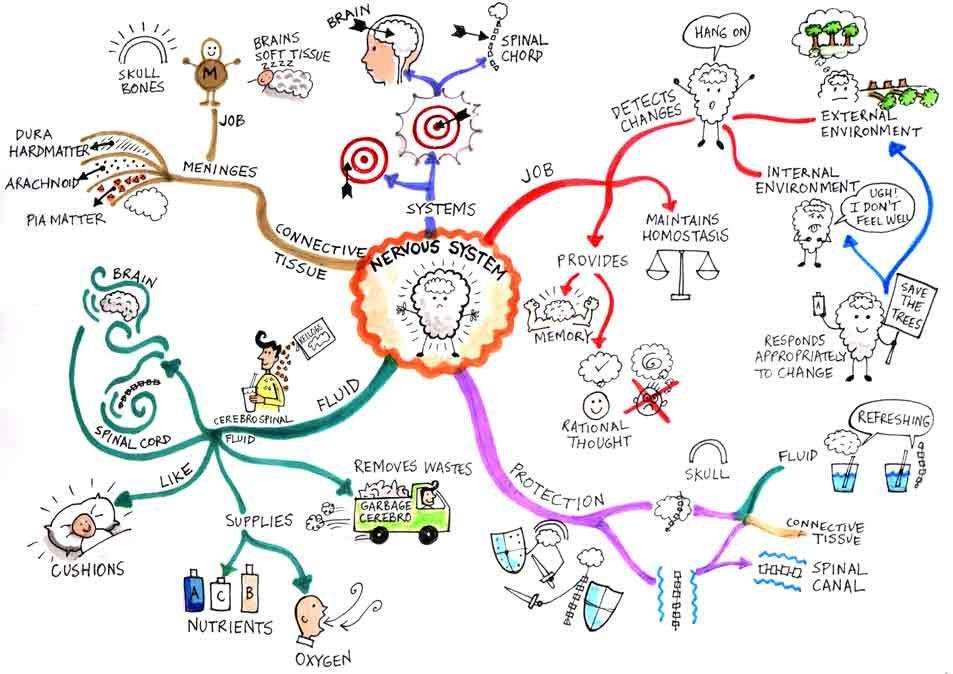نقشه کشی ذهنی