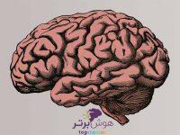 Improve-Long-Term-Memory